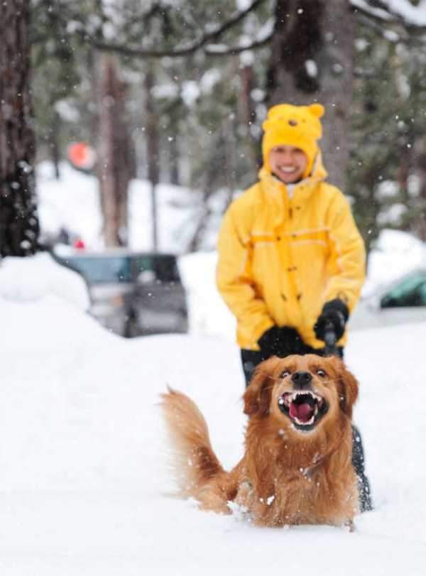 pets-snow-day (29)