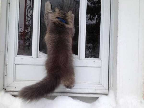 pets-snow-day (3)