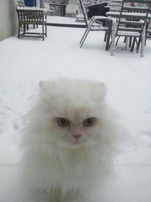 pets-snow-day (30)
