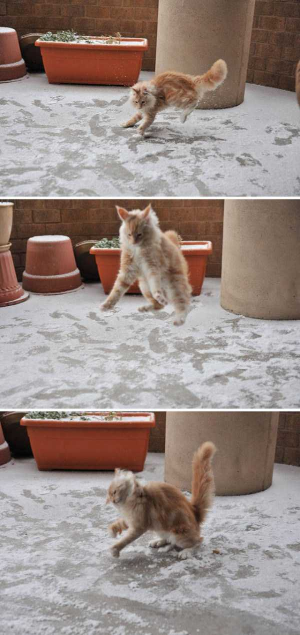 pets-snow-day (36)