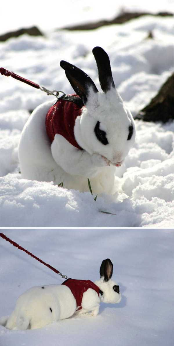 pets-snow-day (37)