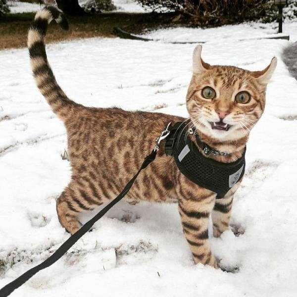 pets-snow-day (4)