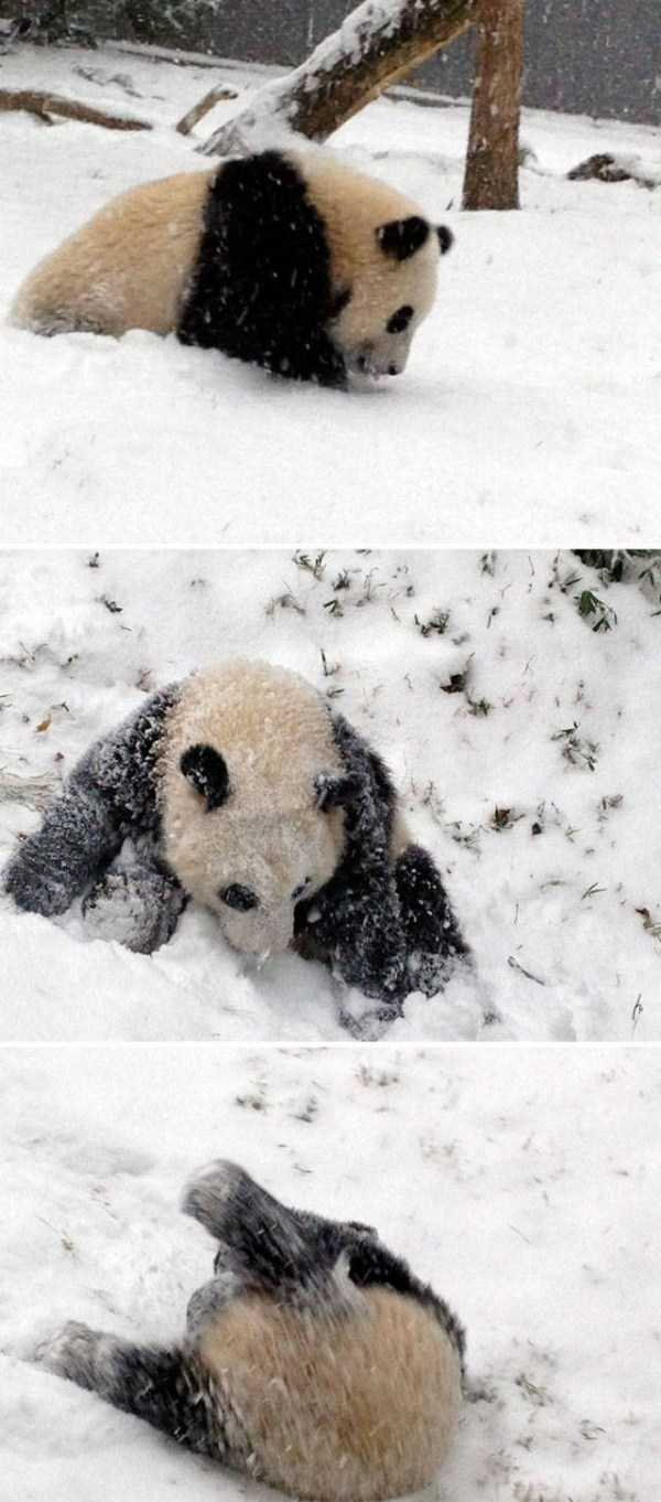 pets-snow-day (40)