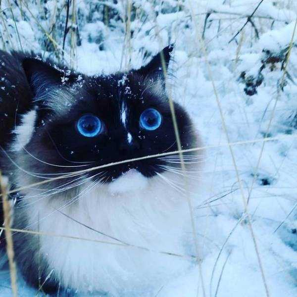 pets-snow-day (6)