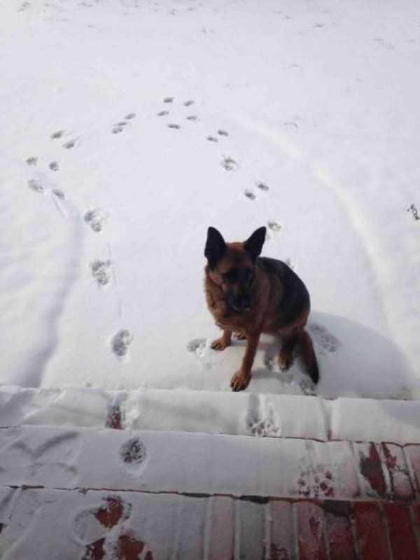 pets-snow-day (7)