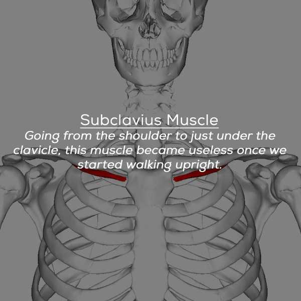useles-human-body-parts (4)