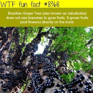 fun-facts (17)