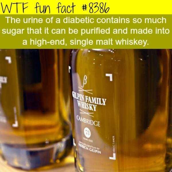 fun-facts (20)