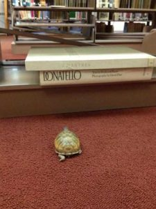 funny-librarians (17)