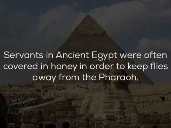 history-facts (18)