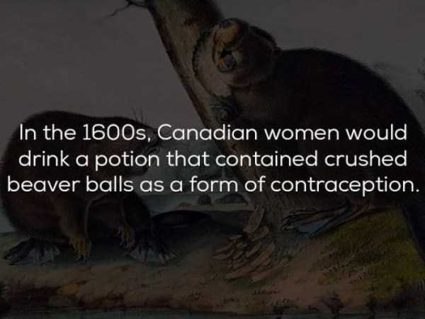 history-facts (23)