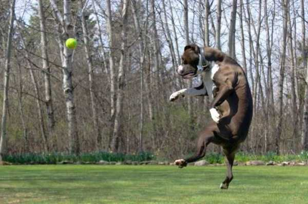 perfectly-timed-pics (25)