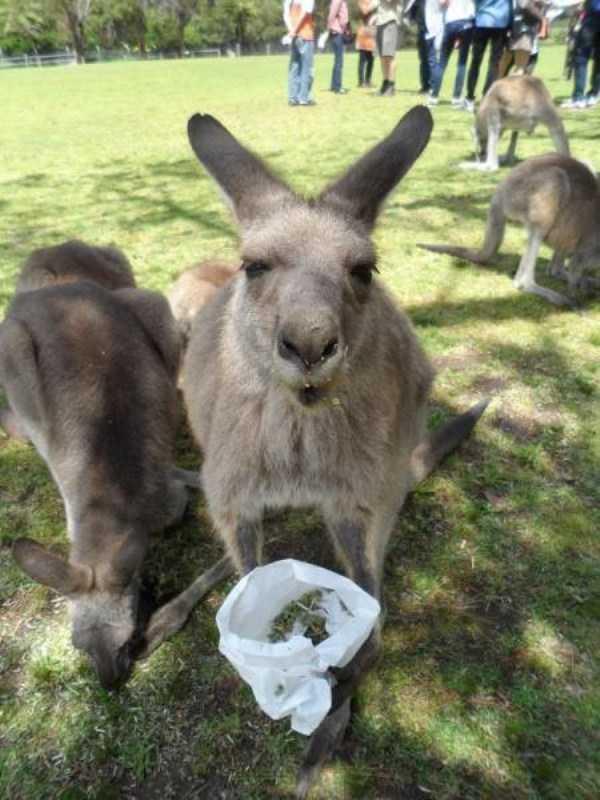 australia-crazy-pics (1)