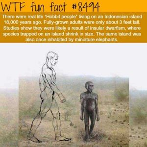 funny-facts (13)