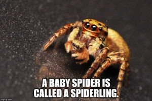 funny-facts (15)