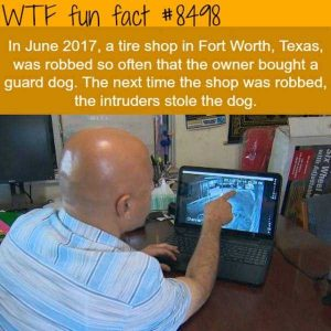 funny-facts (7)