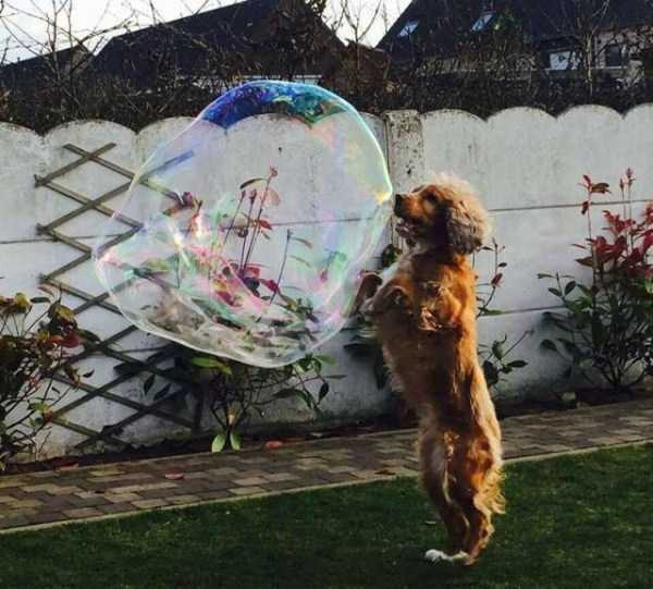 funny-perfectly-timed-pictures (41)