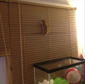 funny-perfectly-timed-pictures (46)