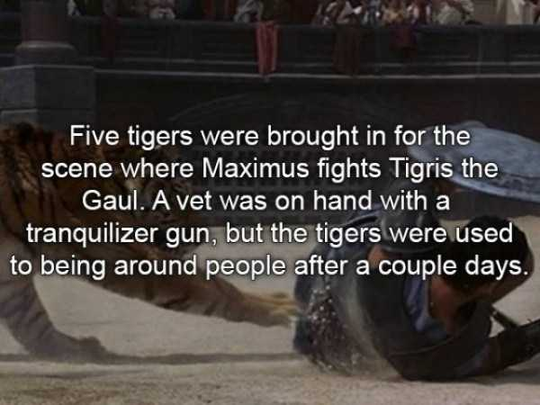 gladiator-facts (21)