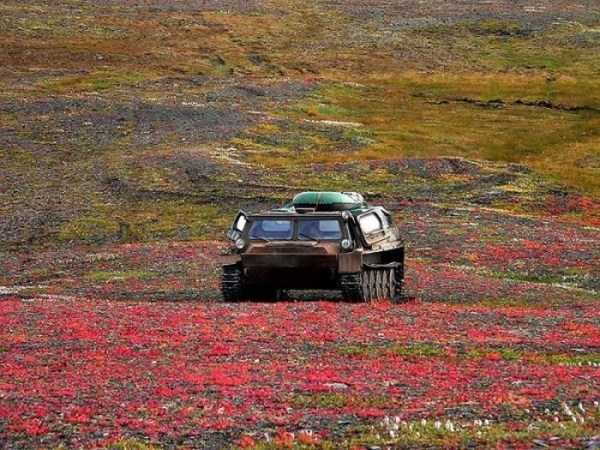 russian-arctic-pictures (1)