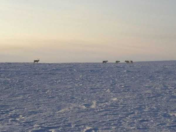 russian-arctic-pictures (23)