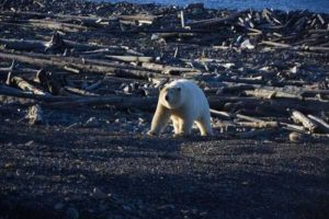 russian-arctic-pictures (4)