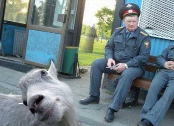 animal-photobombs (18)