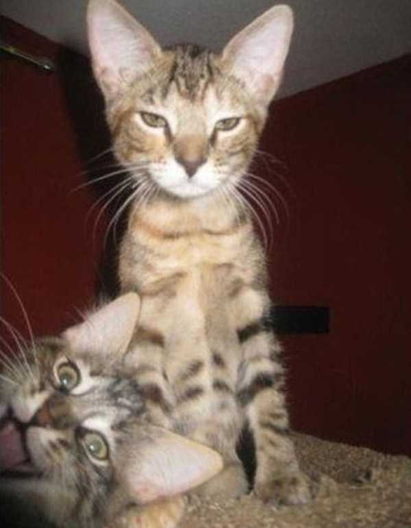 animal-photobombs (21)