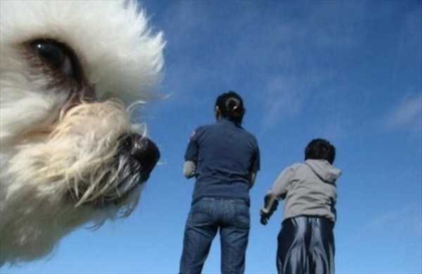 animal-photobombs (30)
