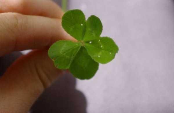 luck (8)