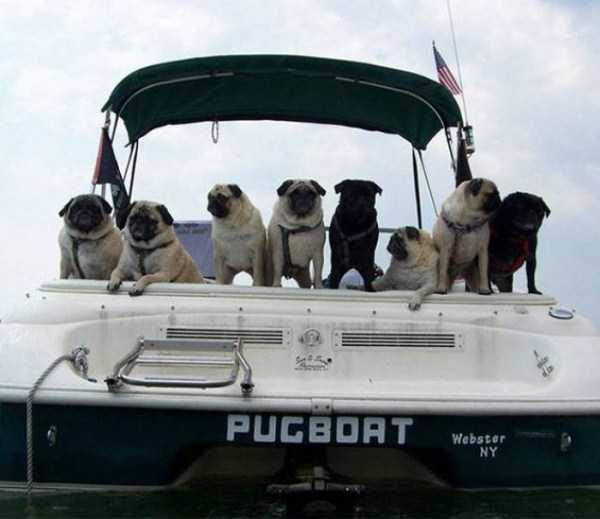 funny-boat-names (5)