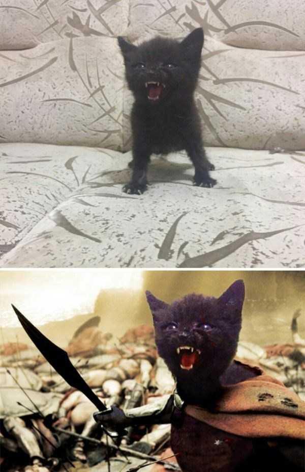 funny-photoshops (11)