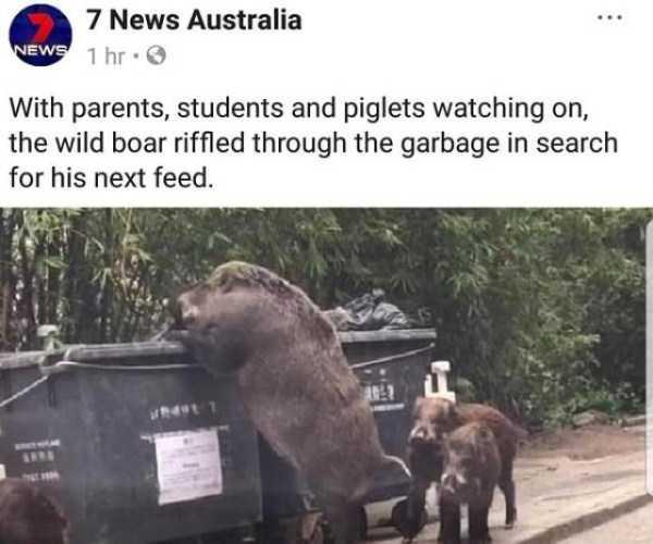 wtf-australia (30)