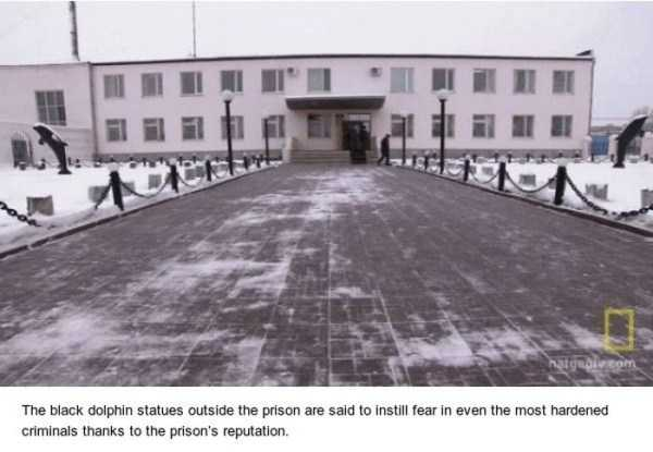 black-dolphin-prison (2)