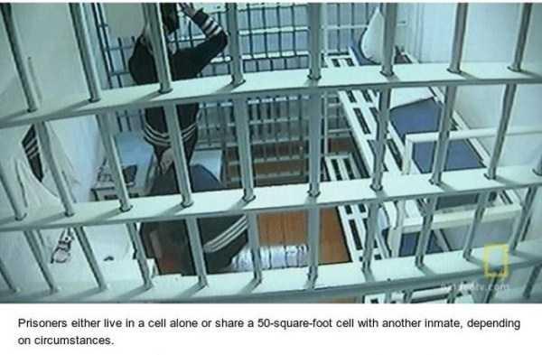 black-dolphin-prison (5)
