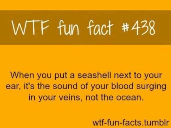 cool-facts (35)