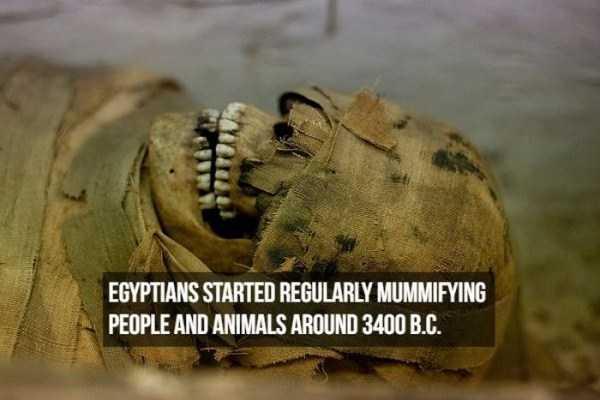 mummies-facts (1)