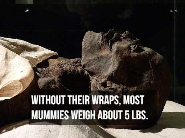 mummies-facts (11)