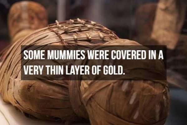 mummies-facts (15)