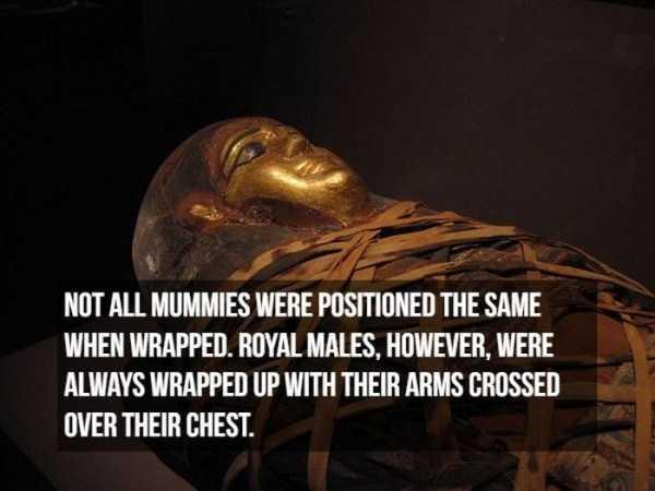 mummies-facts (16)