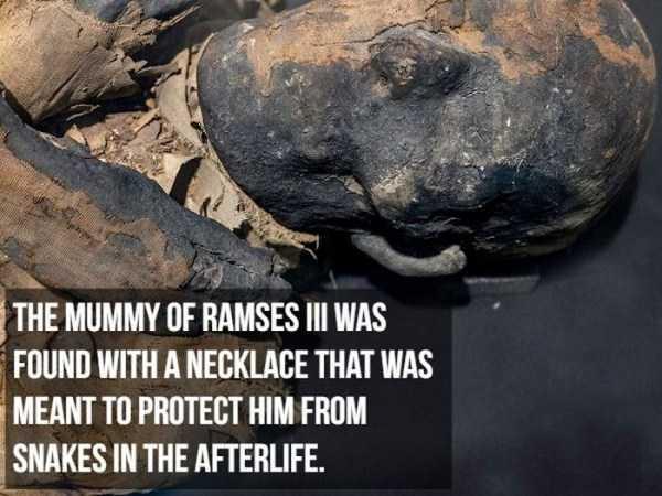 mummies-facts (6)