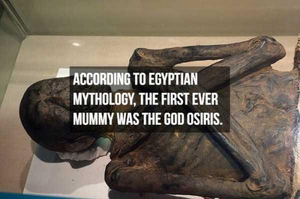 mummies-facts (8)