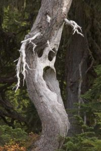 scary-nature (16)