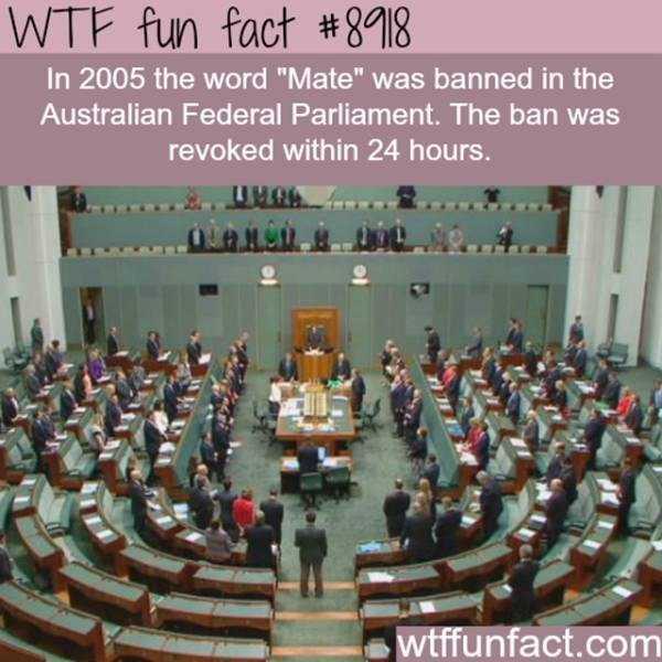 fun-facts (10)