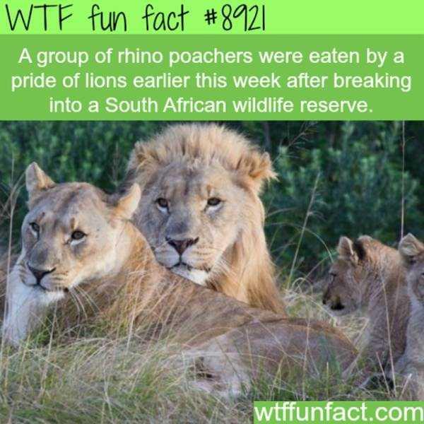 fun-facts (12)