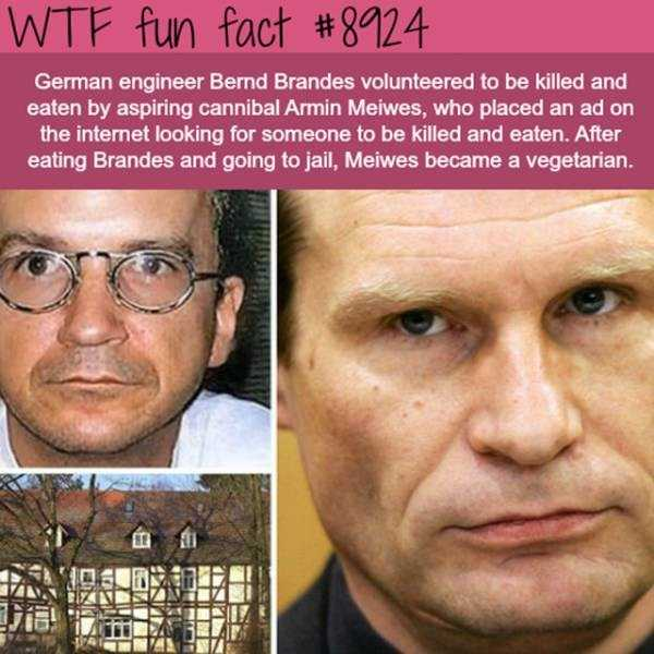 fun-facts (14)