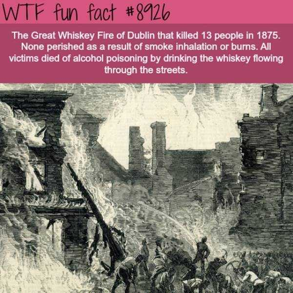 fun-facts (15)