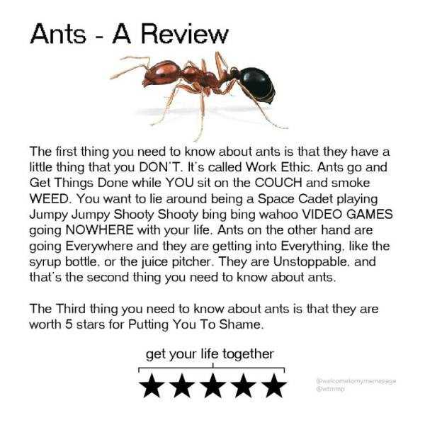 funny-animal-reviews (1)