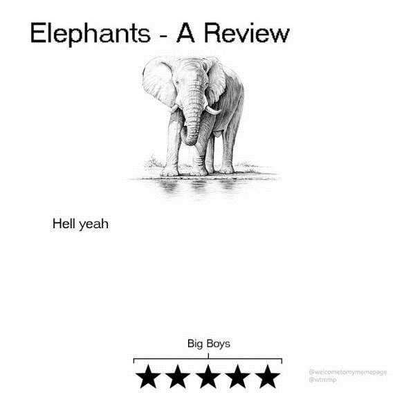 funny-animal-reviews (2)