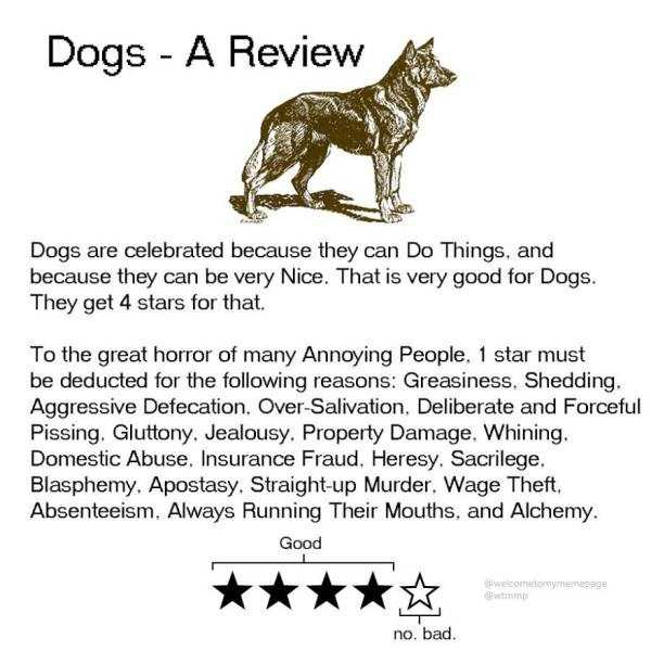 funny-animal-reviews (3)